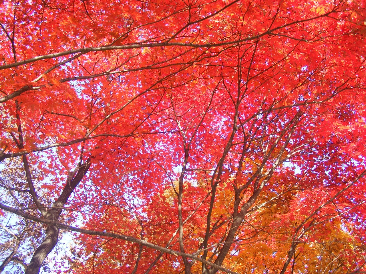 autumn-leaves-258726_1280